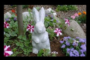 Marble Rabbit
