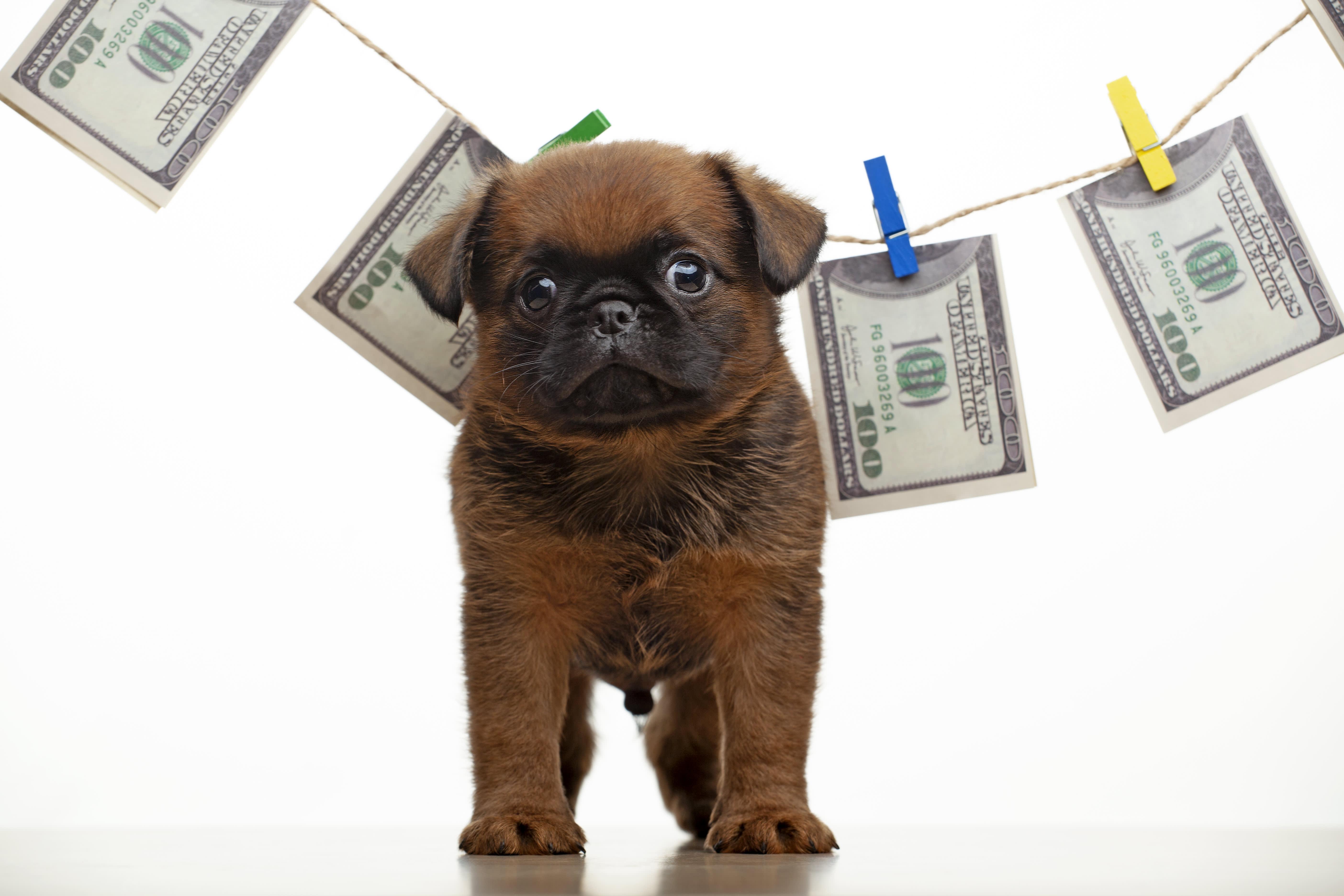 dog guarding money
