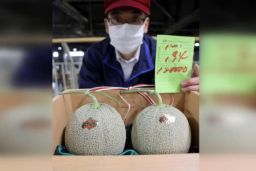 Melons from Yubari