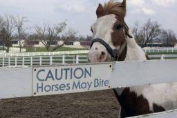 Connecticut horse