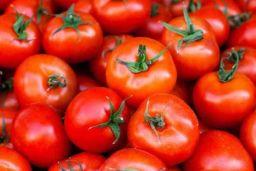 Iran tomato
