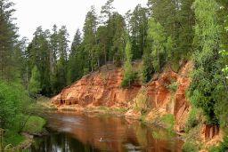 Latvia forest
