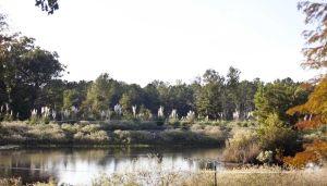 Louisiana farm