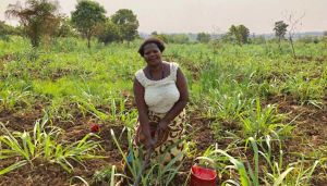 Small African farmer