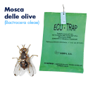 Eco-Trap (Mosca dell'olivo)