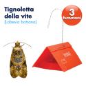Trappola L.Botrana a 3 feromoni