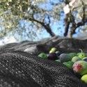 Rete per olive Nera 95 gr./m2