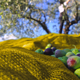 Foto Rete per olive Gialla 130 gr./m2