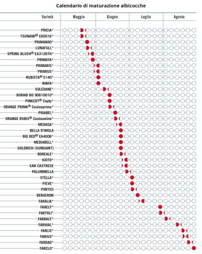 Calendario Maturazione Albicocche.Albicocco Agrimag Area Didattica