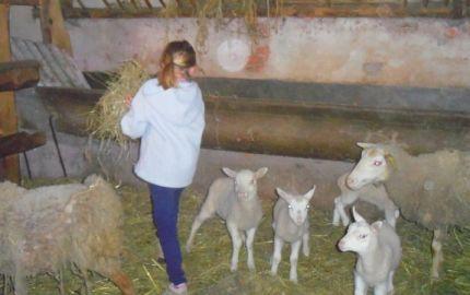 """Suite familiale """"Aulne"""" à la ferme de la Charmotte"""