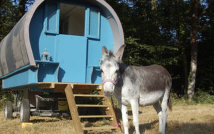 Roulotte Du coq à l'âne