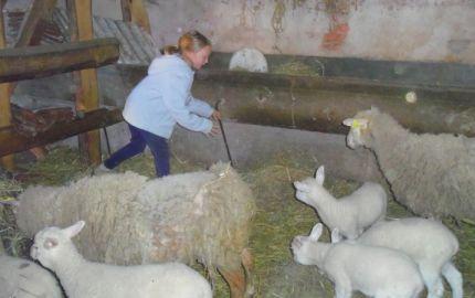 """Chambre """" frêne"""" de la ferme de la Charmotte"""