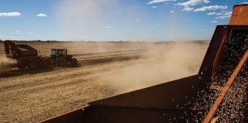 Máquinas Agrícolas Colhendo Grãos