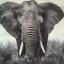 En insamling för att rädda elefanterna