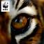 Rädda Tigern!