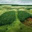 Vi måste rädda Amazonas regnskog nu!
