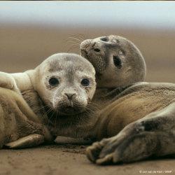 Låt Östersjön leva