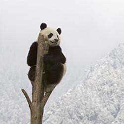 WWF Yleiskeräys