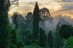 Min regnskogsaksjon