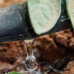 Ingen fremtid uten vann