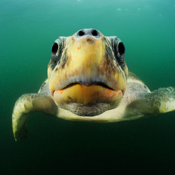 Redd livet i havet!