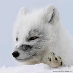 Rädda Arktis