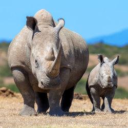 Stoppa utrotningen
