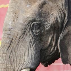 Støt elefanterne