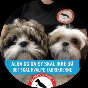 Indsamling for Alba&Daisy- Stop hvalpefabrikkerne!