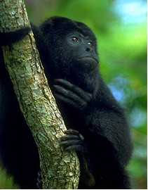 Er det en abe..?