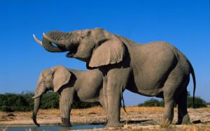 Stopp handelen som dreper elefanten!