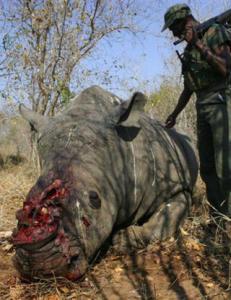 Stopp dyremishandlingen!