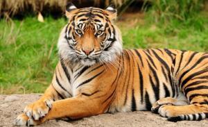 Redd Tigeren sammen med meg? :) <3