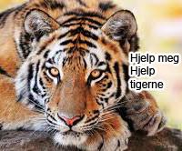 Hjelp tigerne fra utrydelse!