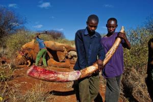 Stopp handelen av elfenben