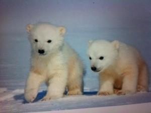 Hjälp mig att rädda isbjörnarna!