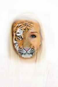 Panthera tigris - hjelp med å hjelpe