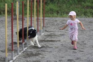 Koiraharrastajien haaste
