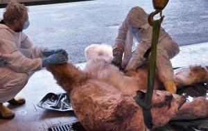 Rädda isbjörnen innan det är försent