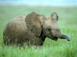 Redd elefanten