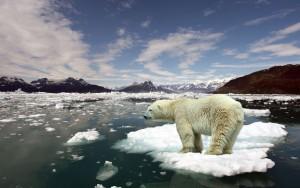 Redd isbjørnen