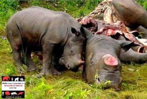 Stoppa tjuvjakten mot oskyldiga djur!