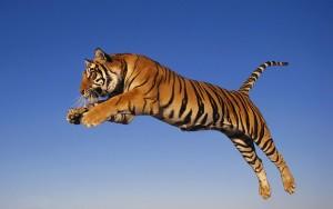 Löfbergs Tigerfond