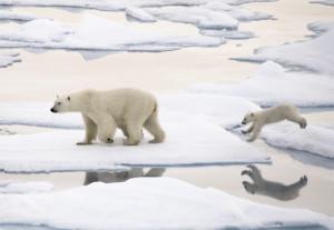 Støtt hjelpen for Antarktisk, og isbjørnene!