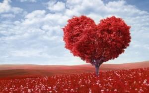 Elsk hjertet indsamling