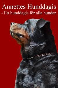 Annettes Hunddagis Hjärte insamling