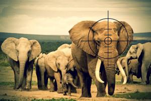 Vår kamp för djurens överlevnad!