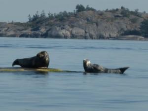 Rädda haven- stöd Greenpeace plastkampen