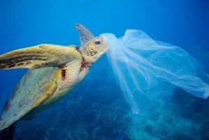 Plastkampen - Dör haven, dör vi