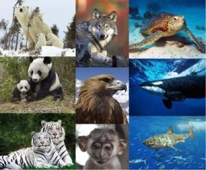 Hjälp världens djur